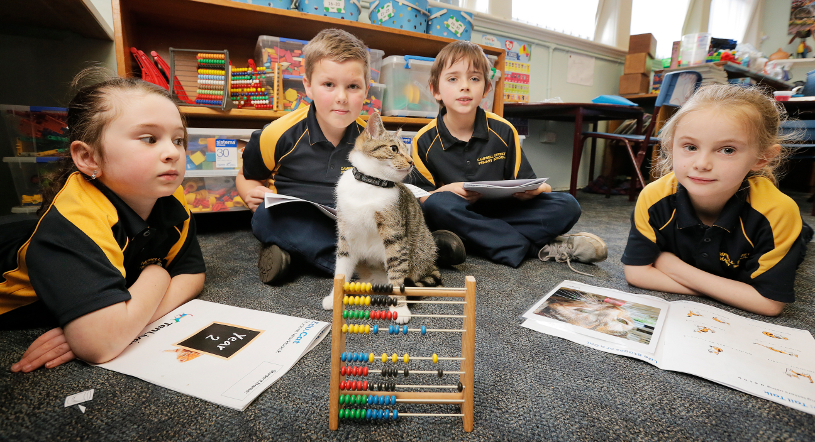 Campbell Street Primary students Holly (6), left, Jacob (8), Gray (8) and Annabelle (7) are part of the cat care education program run by the Ten Lives Cat Centre. Takari the cat checks their work. Picture: MATHEW FARRELL
